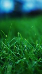 Grass-Closeups-iphone-5-wallpaper-ilikewallpaper_com